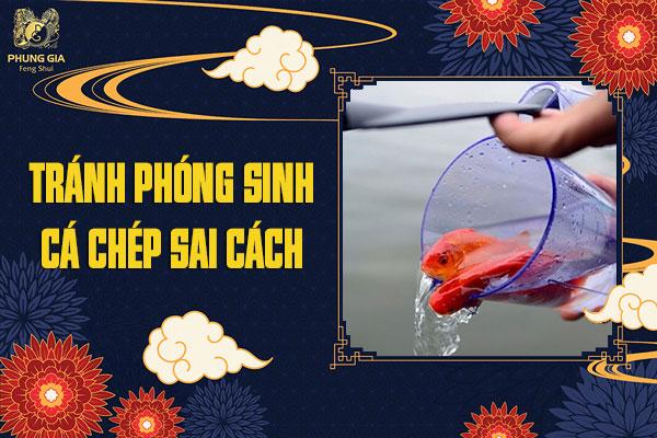 Tránh Phóng Sinh Cá Chép Sai Cách