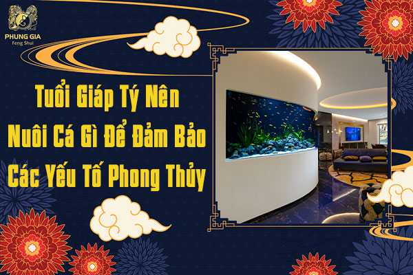 Nuôi Cá Đảm Bảo Yếu Tố Phong Thủy