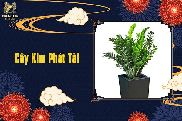 Cây Kim Phát Tài