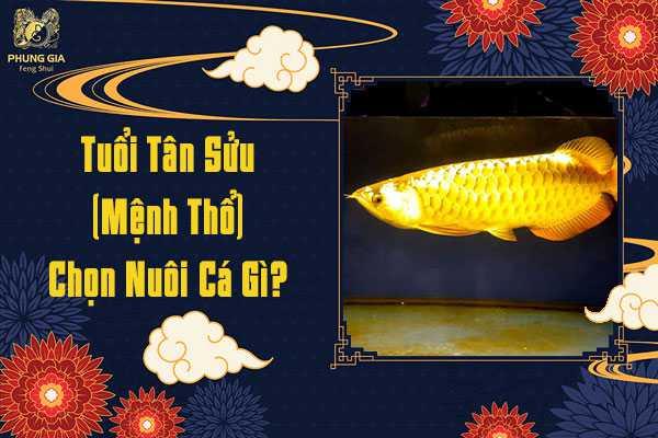 Tuổi Tân Sửu Chọn Nuôi Cá Gì