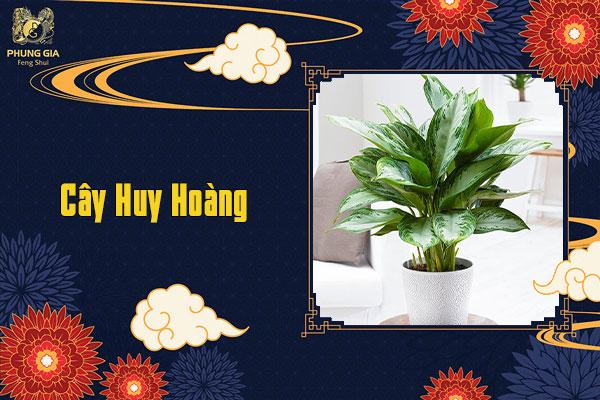 Cây Huy Hoàng