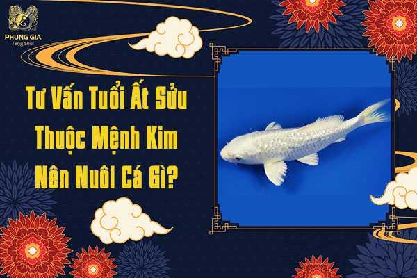 Tuổi Ất Sửu Nên Nuôi Cá Gì