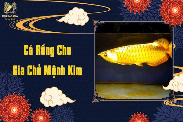 Cá Rồng Cho Gia Chủ Mệnh Kim