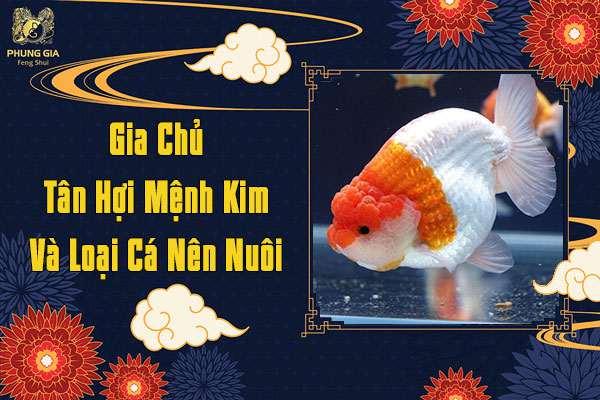 Gia Chủ Tuổi Tân Hợi Mệnh Kim Nên Nuôi Cá Gì