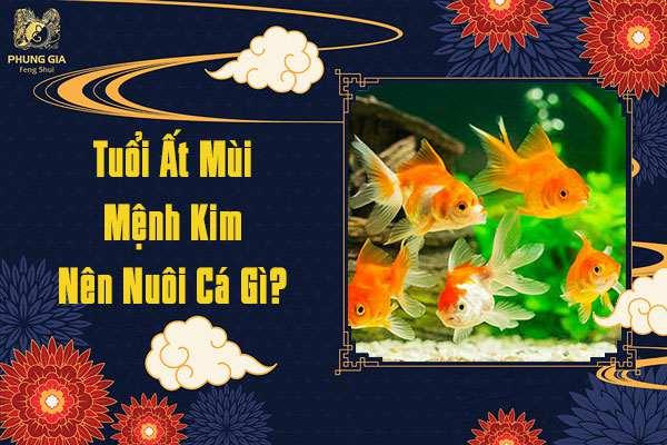 Tuổi Ất Mùi Mệnh Kim Nên Nuôi Cá Gì