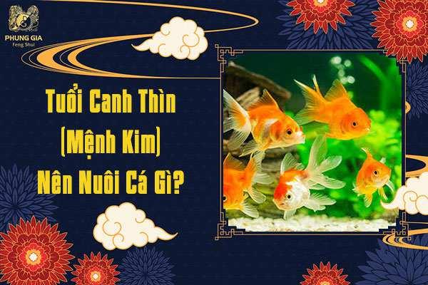 Tuổi Canh Thìn Nuôi Cá Gì
