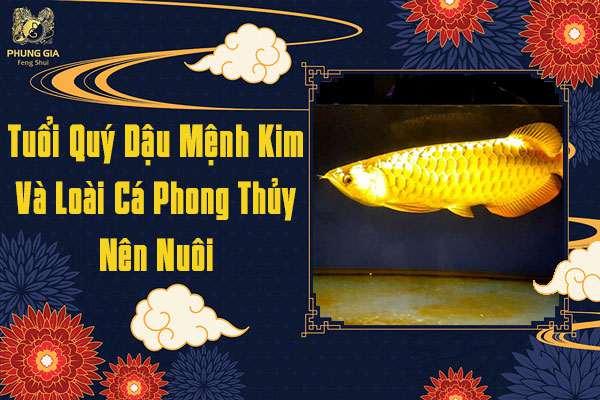 Tuổi Quý Dậu Mệnh Kim Nuôi Cá Gì