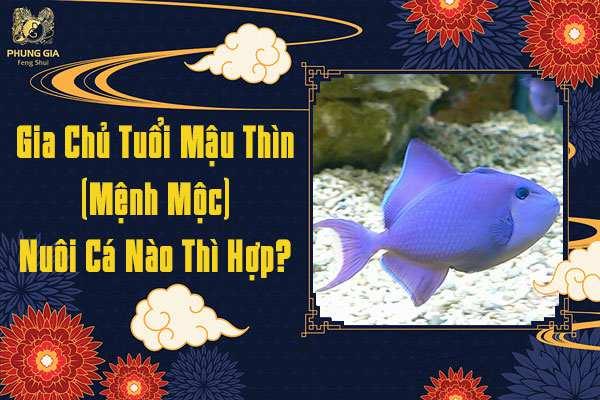 Tuổi Mậu Thìn Nuôi Cá Gì
