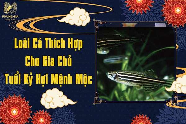 Loại Cá Thích Hợp Cho Gia Chủ Tuổi Kỷ Hợi