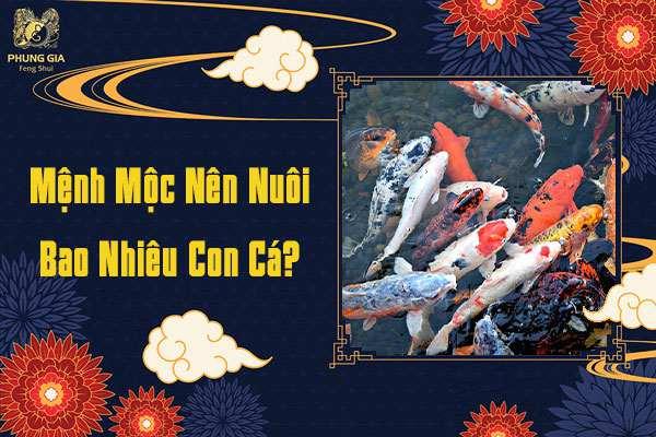 Mệnh Mộc Nuôi Cá Bao Nhiêu Con