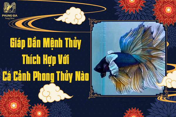 Tuổi Giáp Dần Mệnh Thủy Thích Hợp Nuôi Cá Gì