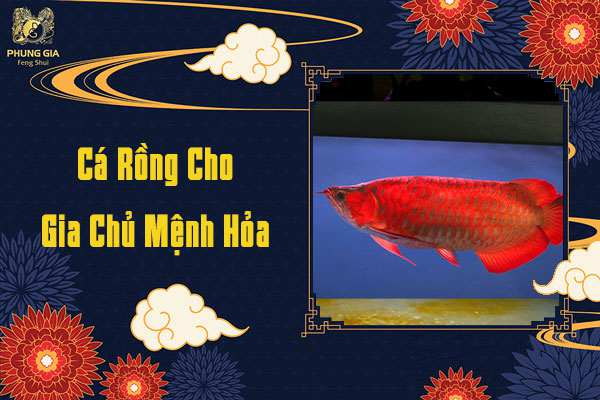 Cá Rồng Cho Gia Chủ Mệnh Hỏa