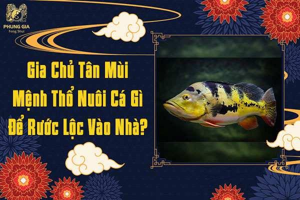 Gia Chủ Tân Mùi Mệnh Thổ Nên Nuôi Cá Gì