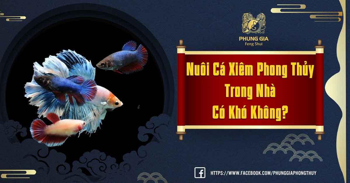 Nuôi Cá Xiêm Phong Thủy
