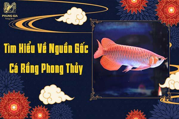 Nguồn Gốc Cá Rồng Phong Thủy