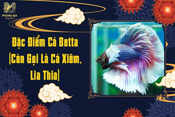 Đặc Điểm Của Cá Betta