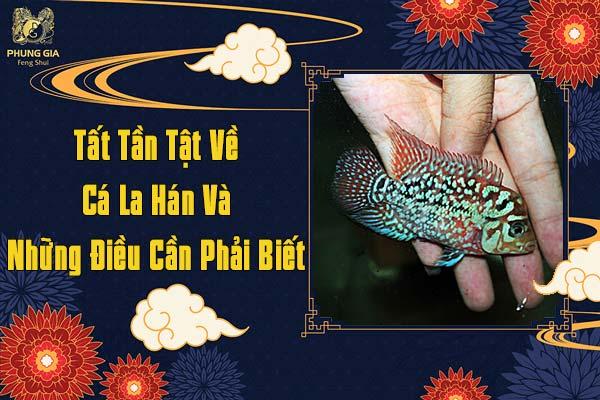 Những Điều Cần Biết Về Cá La Hán Phong Thủy