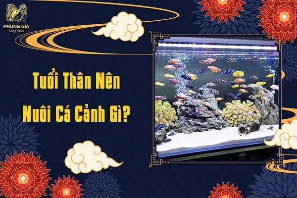 Tuổi Thân Nên Nuôi Cá Cá Cảnh Gì