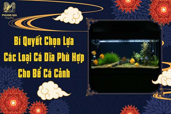 Bí Quyết Chọn Lựa Các Loại Cá Dĩa Phù Hợp Cho Bể Cá Cảnh