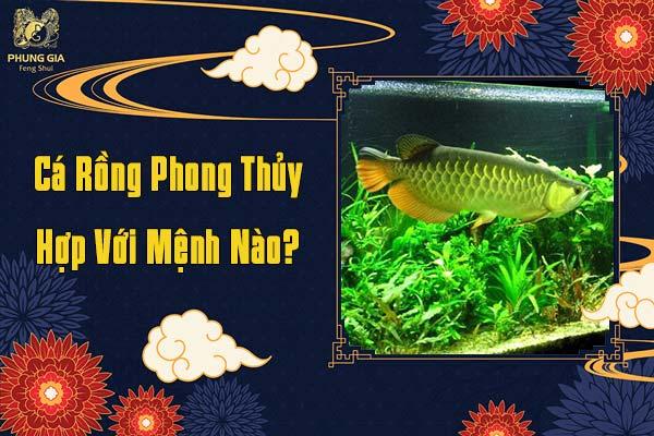 Cá Rồng Phong Thủy Hợp Mệnh Nào