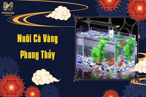 Nuôi Cá Vàng Phong Thủy