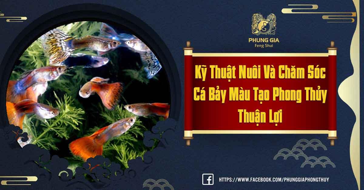 Cá Bảy Màu Theo Phong Thủy