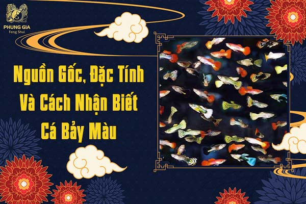 Nguồn Gốc, Đặc Tính Và Cách Nhận Biết Cá Bảy Màu