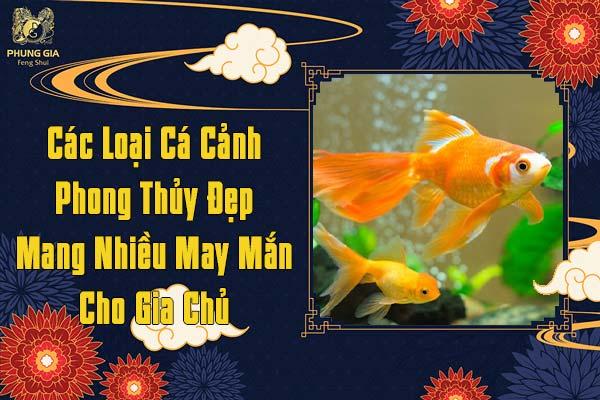Các Loại Cá Cảnh Phong Thủy Đẹp Mang Nhiều May Mắn Cho Gia Chủ