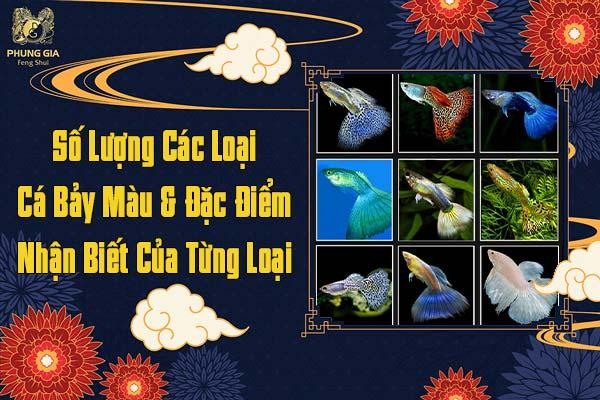 Số Lượng Các Loại Cá Bảy Màu Và Đặc Điểm Nhận Biết Của Từng Loại