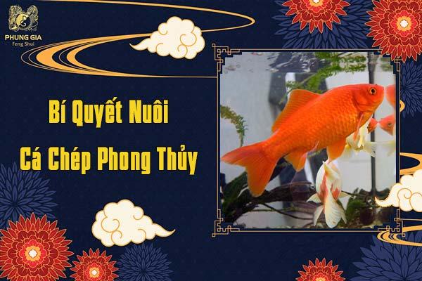 Bí Quyết Nuôi Cá Chép Phong Thủy