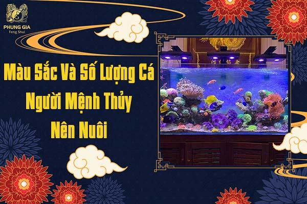 Màu Sắc Và Số Lượng Cá Người Mệnh Thủy Nên Nuôi