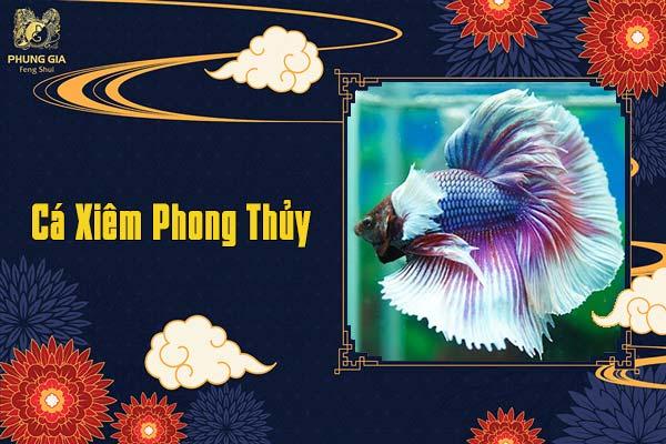 Cá Xiêm Phong Thủy