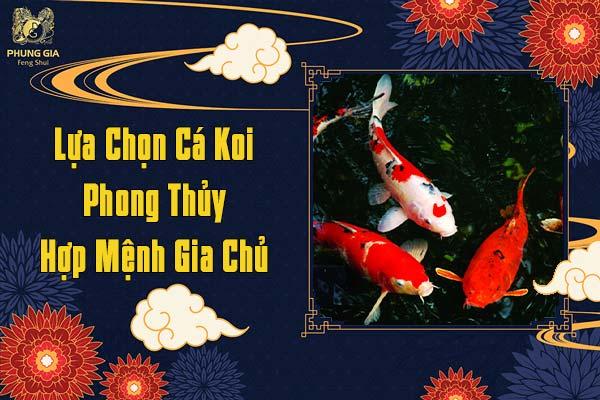 Lựa Chọn Cá Koi Phong Thủy Hợp Mệnh Gia Chủ