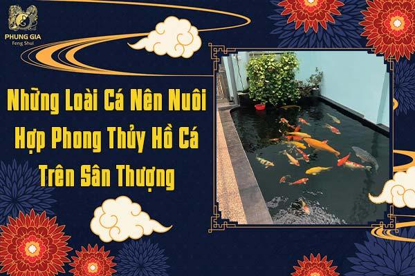 Những Loài Cá Nên Nuôi Hợp Phong Thủy Hồ Cá Trên Sân Thượng
