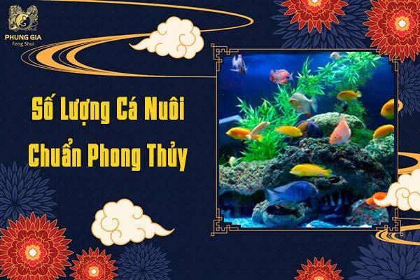 Số Lượng Cá Nuôi Chuẩn Phong Thủy