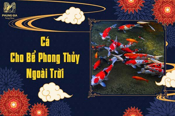 Cá Cho Bể Phong Thủy Ngoài Trời