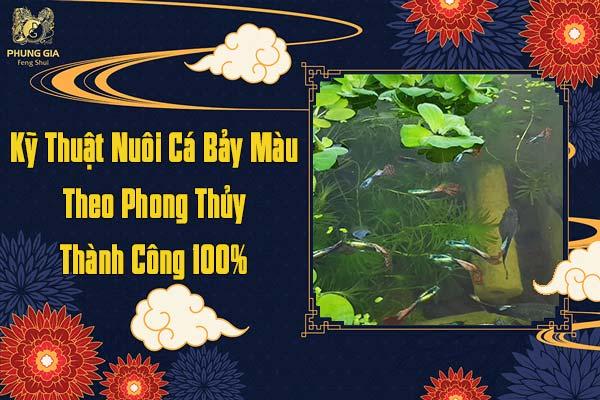 Kỹ Thuật Nuôi Cá Bảy Màu Theo Phong Thủy Thành Công