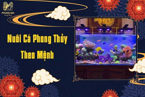 Nuôi Cá Phong Thủy Theo Mệnh