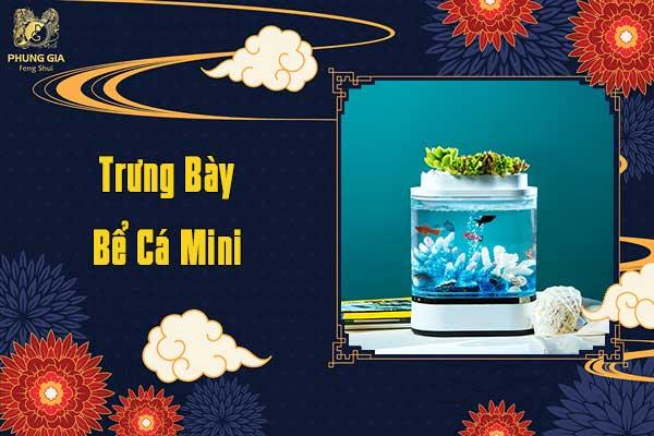 Trưng Bày Bể Cá Mini
