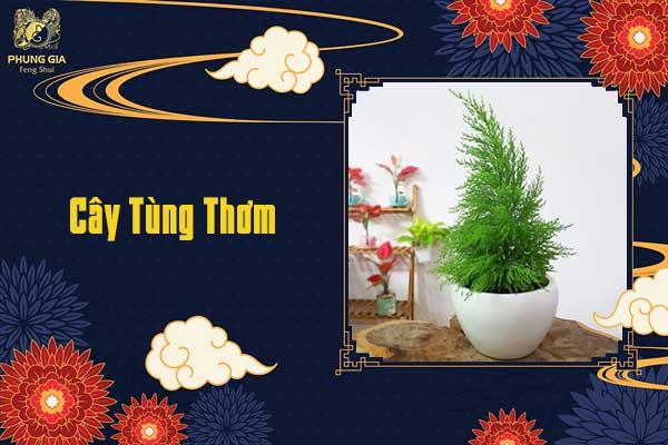 Cây Tùng Thơm